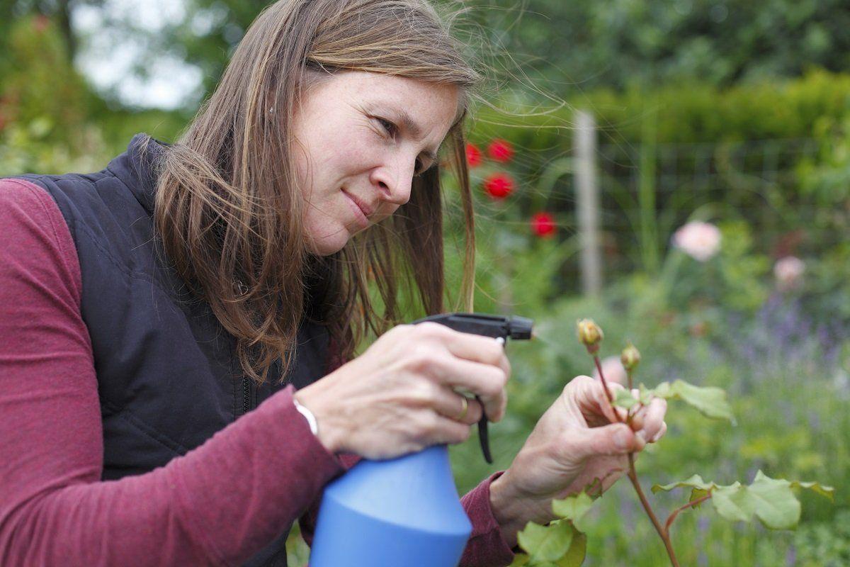 Идеи на тему «Огрод» (900+) в 2021 г | садоводство, огород, овощной огород