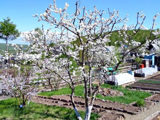Весенние работы в саду и огороде - март, апрель, май