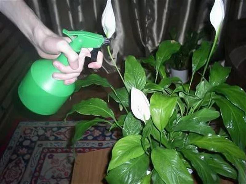 Цветы которые не надо поливать: 9 комнатных растений, которые не требуют много внимания и воды —