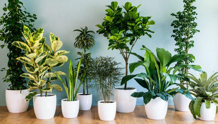 Prozdrowotne rośliny doniczkowe, które warto mieć w domu - Karodos